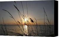 Maryland Canvas Prints - Tall Grass Sunset Canvas Print by Bill Cannon