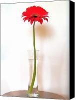 Canvas Wrap Canvas Prints - Tall Red Canvas Print by Marsha Heiken