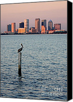 Skylines Canvas Prints - Tampa Skyline and Pelican Canvas Print by Carol Groenen