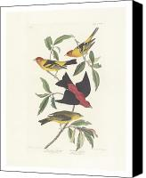 Ornithology Canvas Prints - Tanagers Canvas Print by John James Audubon
