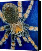 Creepy Painting Canvas Prints - Tarantula by Richard Brooks Canvas Print by Richard Brooks