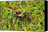 Creepy Digital Art Canvas Prints - Tarantula Canvas Print by Ms Judi