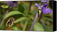 Fine Photography Art Canvas Prints - Target In Sight - Honey Bee  Canvas Print by Steven Milner