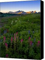 Lupine Canvas Prints - Tatoosh Dawn Canvas Print by Mike  Dawson