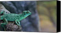 Lizard Canvas Prints - Teal Lizard Canvas Print by Photography by Zack Podratz