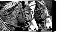 Horse Teams Canvas Prints - Teamwork in the Fields Canvas Print by Laurel Sherman