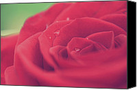 Rose Flower Canvas Prints - Tears of Love Canvas Print by Laurie Search