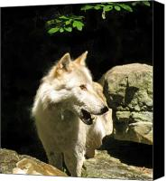 Wolf Photo Shot Canvas Prints - Telling Canvas Print by Debra     Vatalaro
