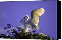 Great Egret Canvas Prints - Tender Love Canvas Print by Kenneth Albin