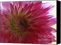 Royal Botanical Gardens Canvas Prints - Tender Moments   Soft Pink Dahlia Canvas Print by Inspired Nature Photography By Shelley Myke