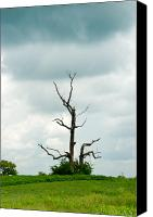 Singular Canvas Prints - Tennessee Lone Tree Canvas Print by Douglas Barnett