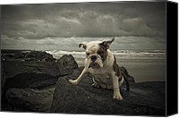 Angry Sky Canvas Prints - Tess #1 Canvas Print by Daan  Overkleeft
