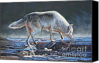 Wolf Pastels Canvas Prints - Testing the waters Canvas Print by Deb LaFogg-Docherty
