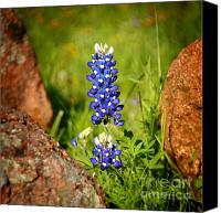 Texas Bluebonnets Canvas Prints - Texas Bluebonnet Canvas Print by Jon Holiday