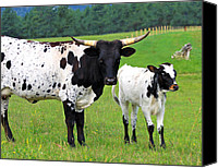 Calf Canvas Prints - Texas Longhorn Cow and Calf Canvas Print by Karon Melillo DeVega