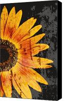 Textures Canvas Prints - Textured Sunflower Canvas Print by Cathie Tyler