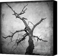 Barren Canvas Prints - Textured tree Canvas Print by Bernard Jaubert