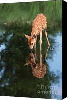 Deer Canvas Prints - That Must Be Me Canvas Print by Sandra Bronstein