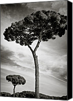 Rome Canvas Prints - The Beauty of Trees Canvas Print by David Bowman