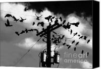 Black Birds Canvas Prints - The Birds Canvas Print by David Lee Thompson