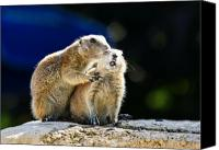 Groundhog Canvas Prints - The Bite Canvas Print by Edward Myers