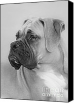 Vertical Canvas Prints - The Boxer Dog - the Gentleman amongst dogs Canvas Print by Christine Till