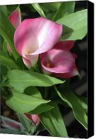 Calla Lily Canvas Prints - The Calla lily Canvas Print by Jerry McElroy