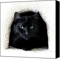 Vet Canvas Prints - The Cat Cave Canvas Print by Glennis Siverson