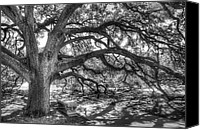 Black And White Photo Canvas Prints - The Century Oak Canvas Print by Scott Norris