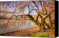 Old Trees Canvas Prints - The Cherry Blossom Festival Canvas Print by Lois Bryan