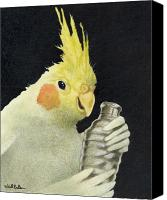 Shaker Canvas Prints - The cockatiel shaker... Canvas Print by Will Bullas