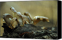 Mushroom Canvas Prints - The Colony  Canvas Print by Rebecca Sherman