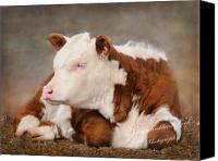Fam Canvas Prints - The Contented Calf Canvas Print by Terry Kirkland Cook