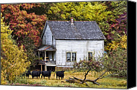 Barn Windows Canvas Prints - The Cows Came Home Canvas Print by Debra and Dave Vanderlaan