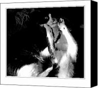 Black And White Cats Canvas Prints - The Dance 5 Canvas Print by Margaret Hood
