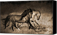 Wild Stallion Canvas Prints - The Dance Canvas Print by Lisa Dearing