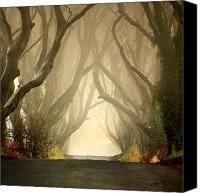 Framed Fine Art  Canvas Prints - The Dark Hedges 2011 Canvas Print by Pawel Klarecki
