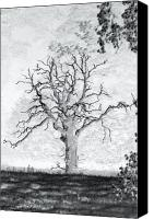 Mayo Photographs Photographs Framed Prints Canvas Prints - The Dead Tree Canvas Print by Paul  Mealey