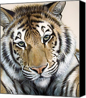 Tiger Canvas Prints - The Embrace Canvas Print by Sandi Baker