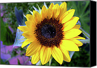 Flower Images Canvas Prints - The Eye Of The Flower Canvas Print by Skip Willits