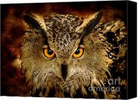 Bird Of Prey Canvas Prints - The Eyes Canvas Print by Photodream Art