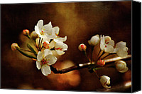 Tree Blossoms Canvas Prints - The Fleeting Sweetness of Spring Canvas Print by Lois Bryan