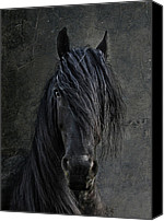 Stallion Canvas Prints - The Frisian Canvas Print by Joachim G Pinkawa