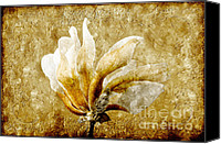 Closeup Mixed Media Canvas Prints - The Golden Magnolia Canvas Print by Andee Photography