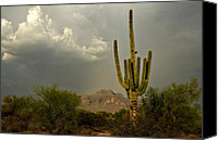 The Superstitions Canvas Prints - The Golden Saguaro  Canvas Print by Saija  Lehtonen