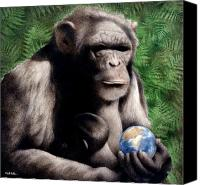 Chimpanzee Canvas Prints - The Good Mother... Canvas Print by Will Bullas