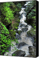 Foilage Canvas Prints - The Gorge Canvas Print by Paul Ward