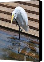 Great Egret Canvas Prints - The Great Egret Canvas Print by Kevin Hertle