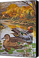 Susan Leggett Canvas Prints - The Green-Winged Teal by Bart Jerner Canvas Print by Susan Leggett