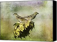 Finches Canvas Prints - The Harvesters Canvas Print by Diane Schuster